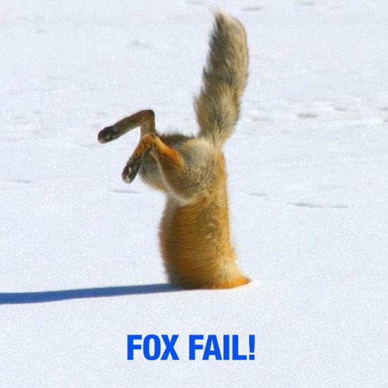 Fox_fail
