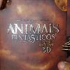 Vídeo mostra detalhes do Blu-ray 3D de Animais Fantásticos e Onde Habitam